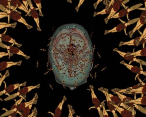Going Native (film still) Susan Aldworth 2006, short film about consciousness